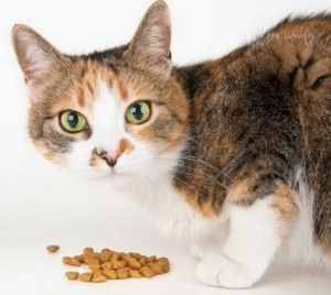 Comida para gatos con insuficiencia renal barata