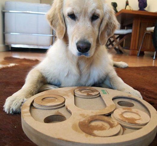 Regalos originales perros