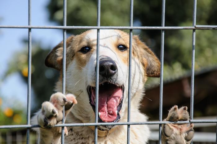 perros en adopcion cachorros madrid