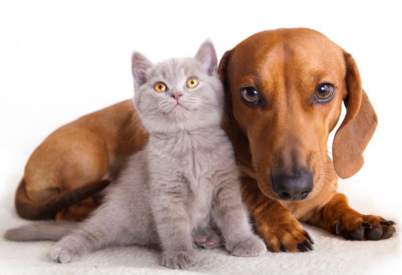 Farmacia veterinaria online barata