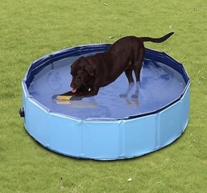 piscina perros