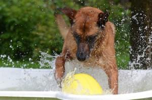 piscinas perros