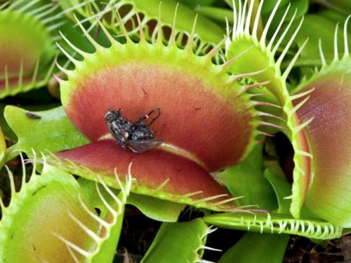 plantas carnivoras cuidados