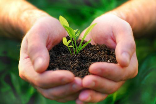 Venta de plantas online