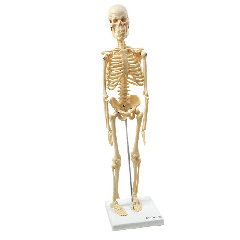 comprar esqueleto humano pequeño