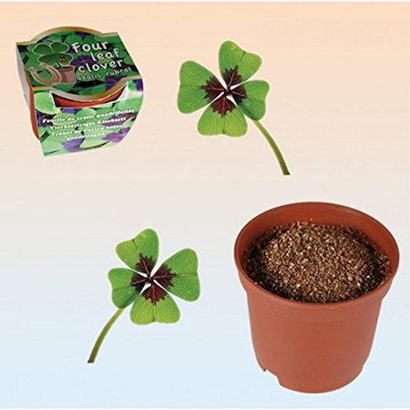 planta de trébol de 4 hojas