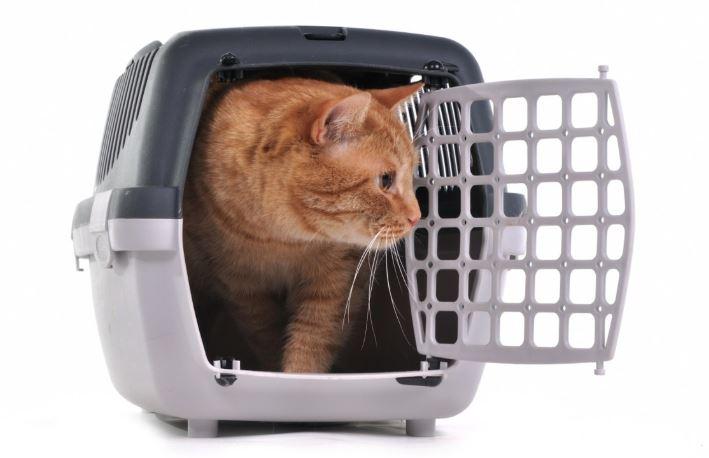 donde comprar un transportin para gatos barato