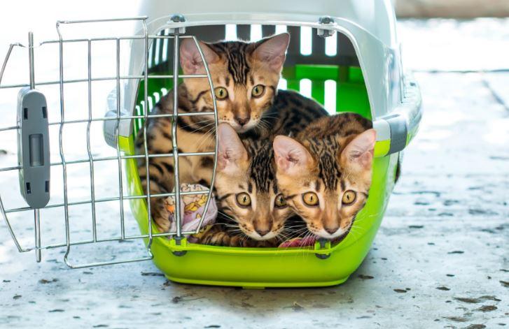 transportin para varios gatos no recomendado